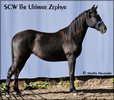 SCW The Ultimate Zephyr #20601058