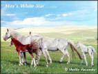 May's White Star